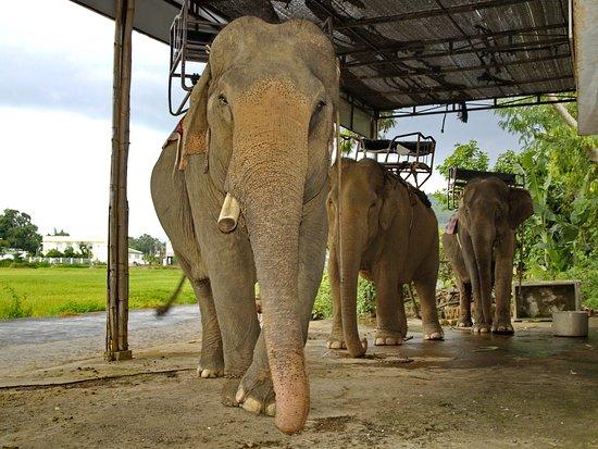 Dak Lak Province, Vietnam: Озеро Лак. Стоянка слонов.