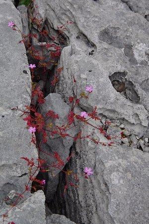 Corofin, Irland: Burren NP