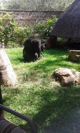 Pamusha Lodge: Piece of art looks like the real elephant