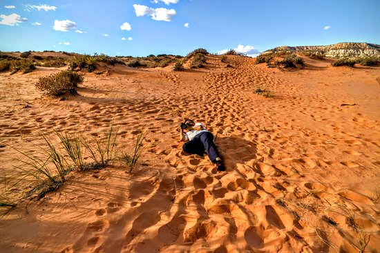 Coral Pink Sand Dunes State Park: Coral Pink Sand Dunes