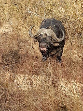 Ladysmith, South Africa: 20160723_080522_large.jpg