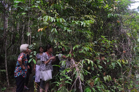 Корелла, Филиппины: Visitors trek through a small tract of land to view the tarsiers.