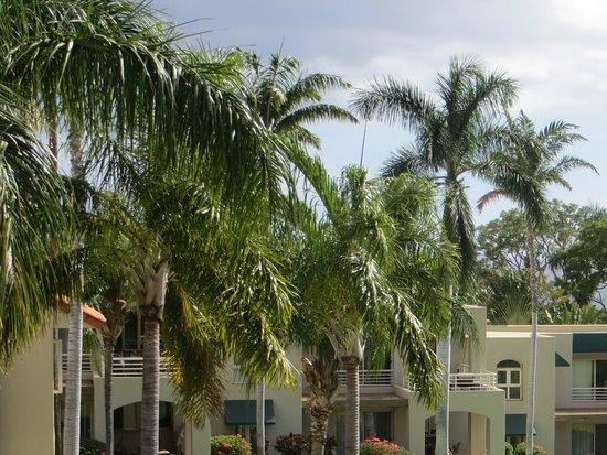 Palms at Wailea: Condos