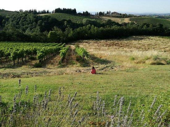 Borgo Tollena: IMG_20160721_190138_large.jpg