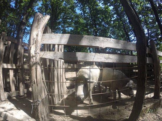 Central Serbia, Serbia: Algunos de los animales de la granja