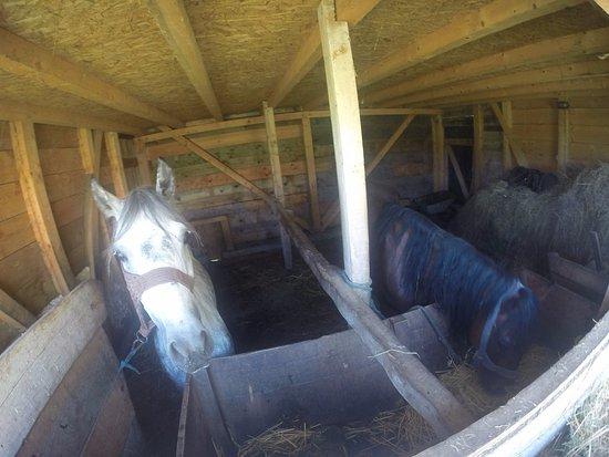 Central Serbia, Serbia: Los caballos de la granja