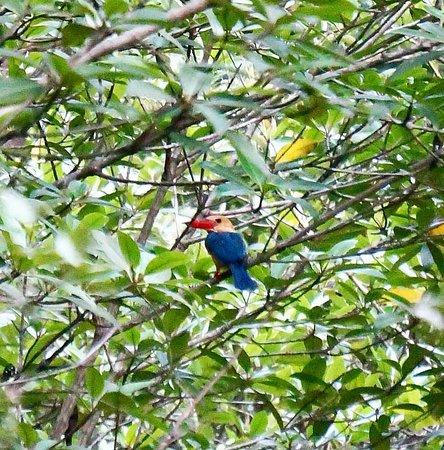 Kota Kinabalu Wetland Centre : Screenshot_2016-07-24-21-43-05-1_large.jpg