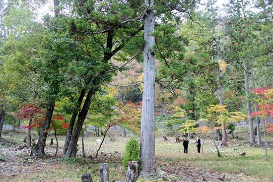 Ruins of Ike no Sawateien Garden