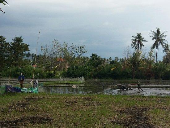 Anturan, Indonesia: 20160616_142042_large.jpg
