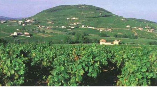 Quincie-en-Beaujolais, Francia: Le Mont Brouilly est tout proche.