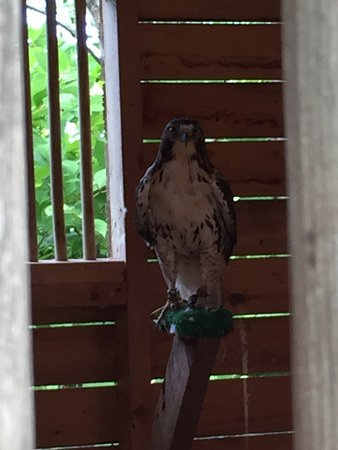 Stratford, Canada: Fun with Falcons (and Hawks)