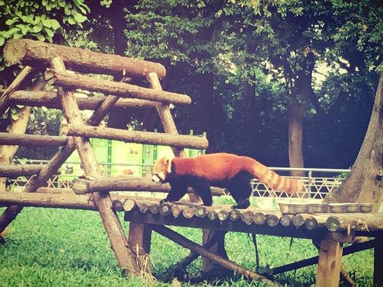 Guangzhou Zoo: photo9.jpg