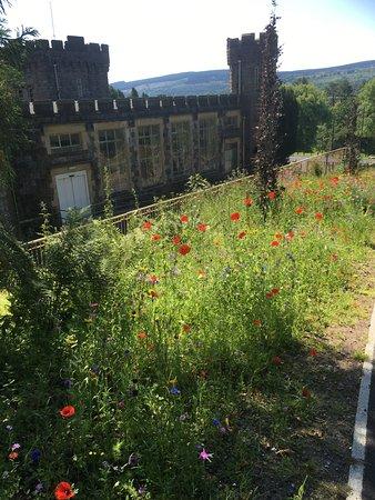 Merthyr Tydfil, UK: Wild flowers at Cyfarthfa Castle