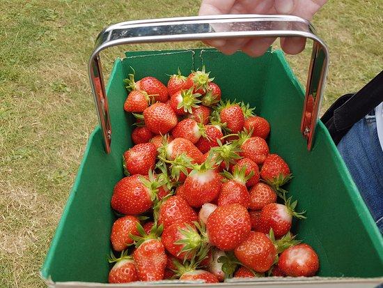 Gravely Fruit Farm