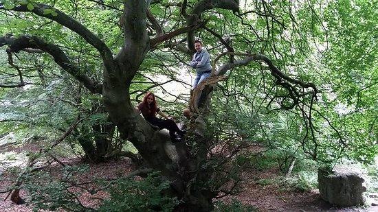Lund, Suecia: Huge tree :D