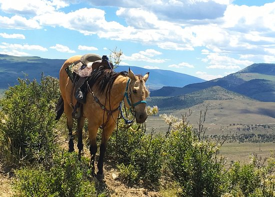 Wolcott, Kolorado: Well trained guide horse
