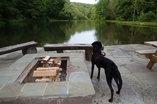 Bradford, PA: Skipper Lake - Dexter Enjoying the view from Skipper Lake