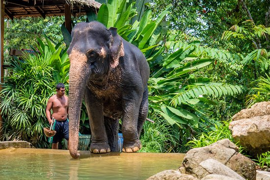 Phang Nga, Tailandia: Entering the bathing pool