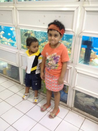 Souq Waqif: golden fish shop