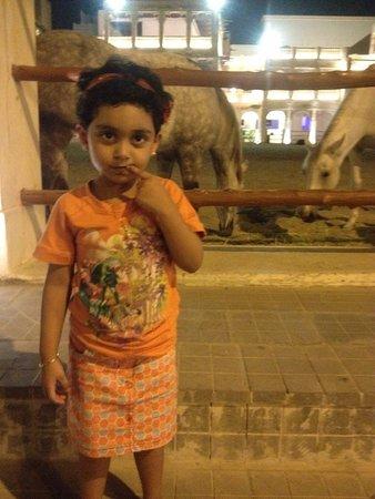 Souq Waqif: horses