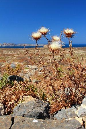 Gramvousa, Griekenland: miejscowa roslinność