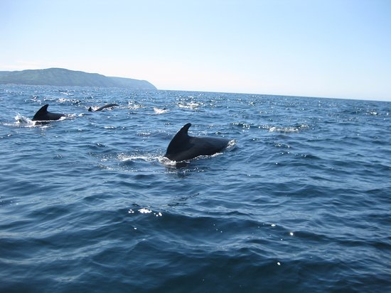 Pleasant Bay, Kanada: More Whales