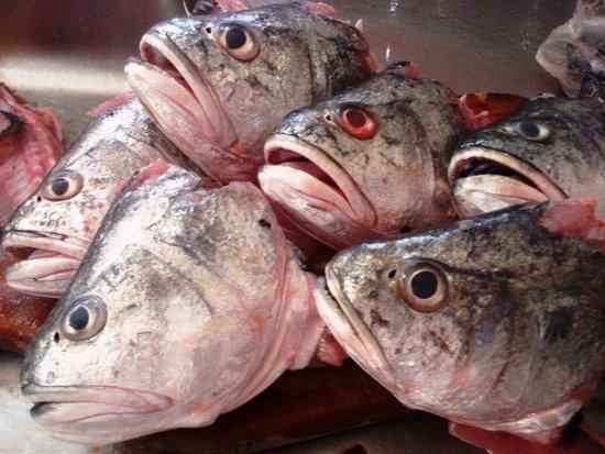 Barrancabermeja, كولومبيا: pescados