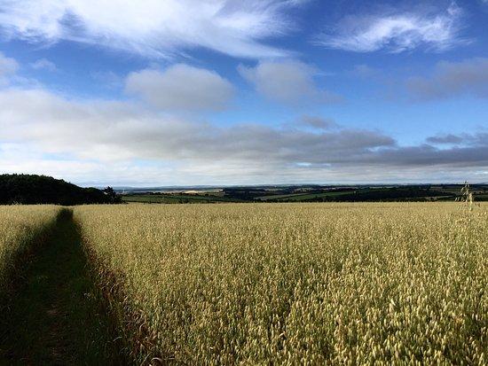 Luccombe Farm