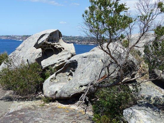 Manly, Αυστραλία: North Head Sanctuary