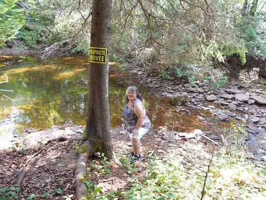 Caplan, Canada : dans le petit boisé  un petit ruisseau  coule.