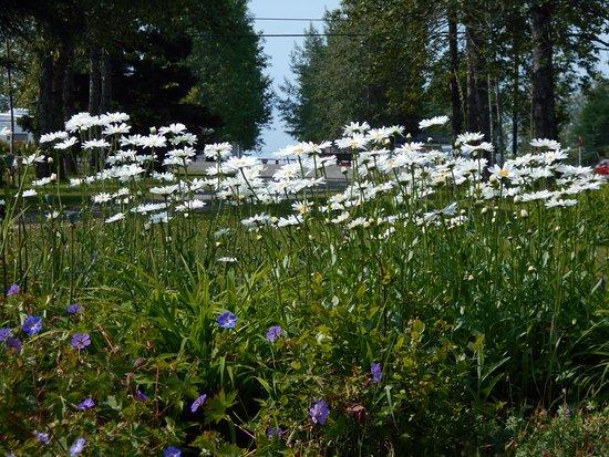 Caplan, Canada : Des fleurs de toutes sortes  s'y retrouvent  ,une nuit ce n'est pas assez !