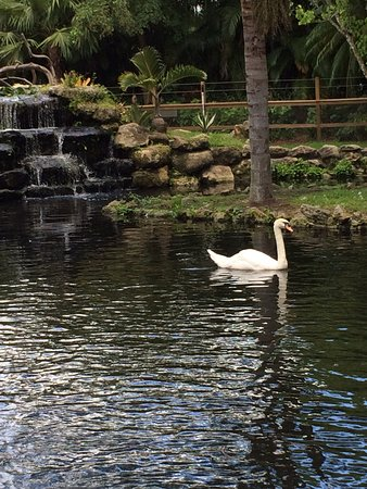 Loxahatchee, FL: Pretty pond where you can also feed the fish.