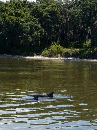 Fernandina Beach, FL: 20160723_132816_large.jpg