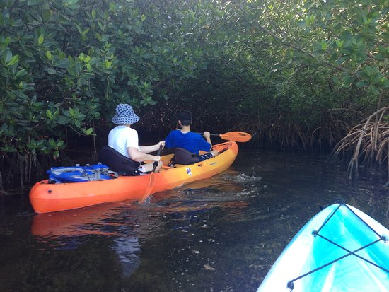 Kayak Kings Key West: Into the mangrove!