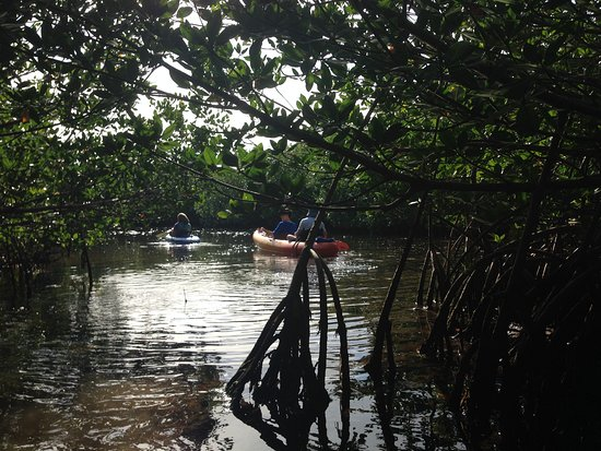 Kayak Kings Key West: Exiting a path through a mangrove