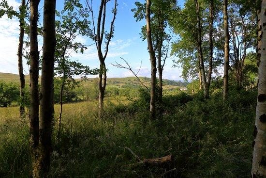 Penderyn, UK: Woodland Path