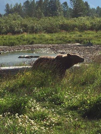 Wasilla, AK : photo5.jpg