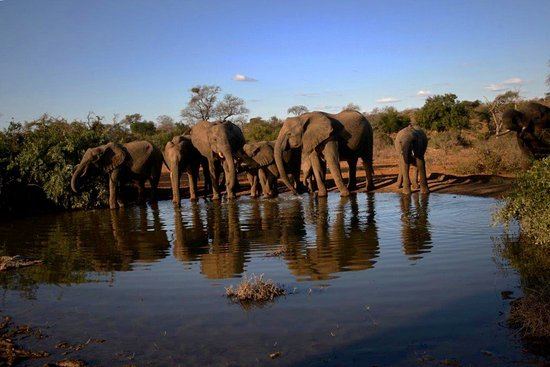 Kings Camp: Lots of elephants in the area. Photo by Ilan Ossendryver