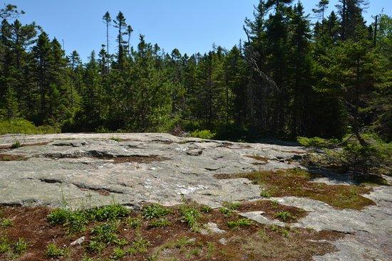 Southwest Harbor, ME: Rock formation on trail