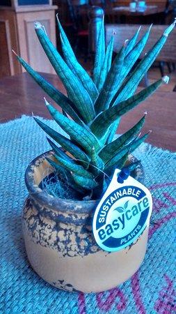 Heilbad Heiligenstadt, Almanya: plant on every table