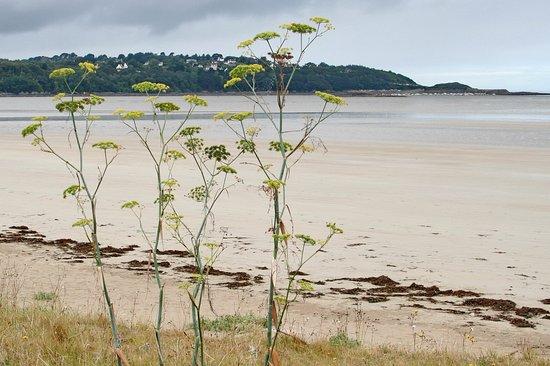 Plestin les Greves, Francia: Lieue de Greve | Plestin-les-Greves, Cotes-d'Armor, Bretagne, France