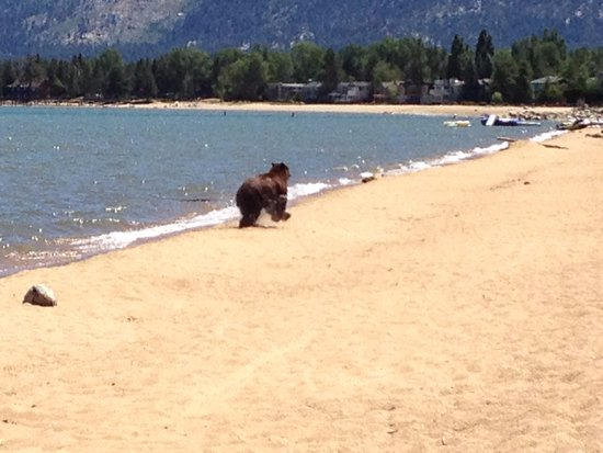 South Lake Tahoe, Californien: the water feels great when you're wearing a fur coat!!!
