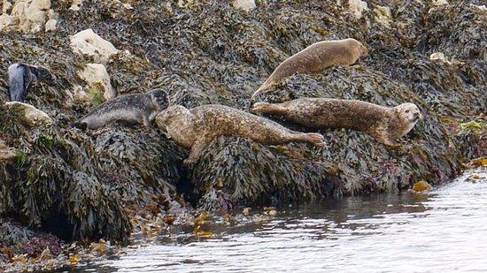 Kenmare, Irland: Seafari Cruises - zeeleeuwen