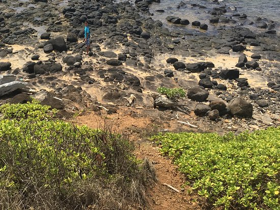 Kauai Path: Neat stretch of rocky shore along a scenic overlook.
