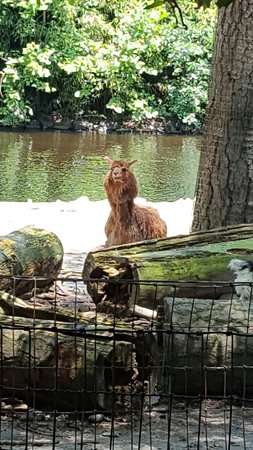 Salisbury Zoo: 20160715_125234_large.jpg