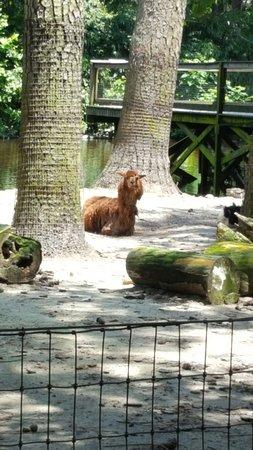 Salisbury Zoo: 20160715_125409_large.jpg