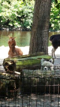 Salisbury Zoo: 20160715_125237_large.jpg