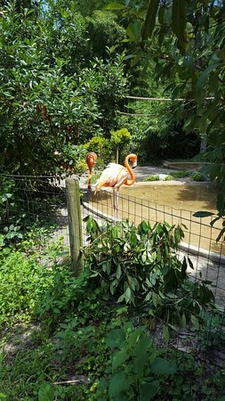 Salisbury Zoo: 20160715_124312_large.jpg