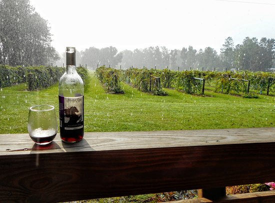 Enjoying the sunshower from the porch  Picture of Bluefield Estate Winery,  # Sunshower Goes_064641