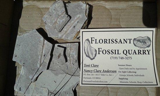 Фотография Florissant Fossil Quarry